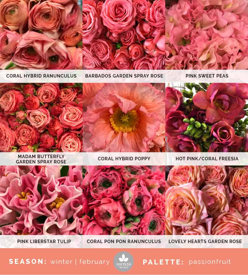 Coral Wedding Colours